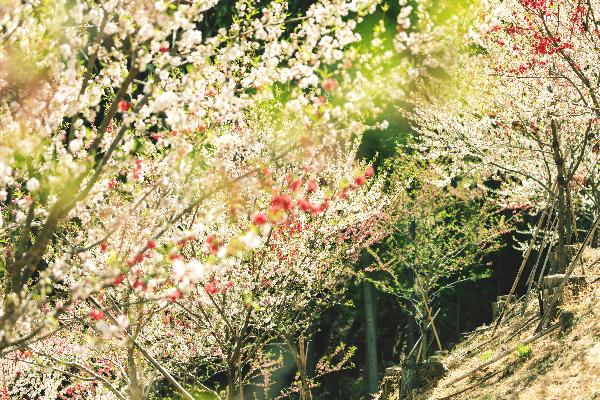 上野村のゆったりとした自然