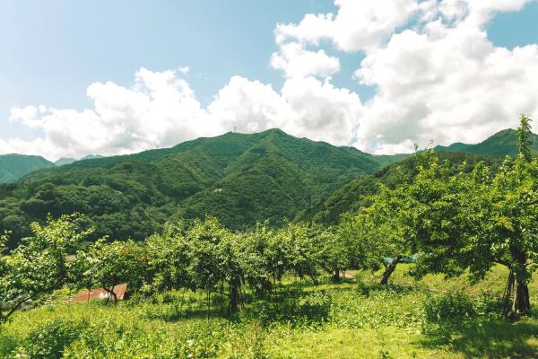 上野村の空気が澄んだ山々